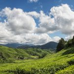 The Ultimate Guide to Malaysia's Cameron Highlands