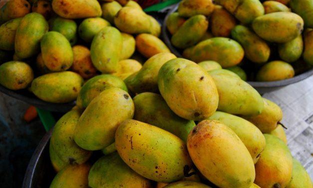 Kesar Mango: The Crown Jewel of all Mangoes