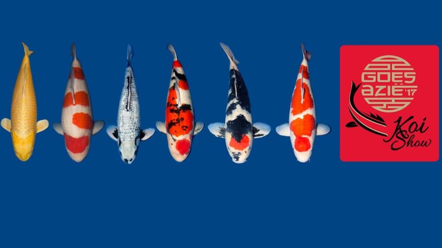 Koi Show - Fish Type