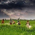 AI Farming: India's Smart Solution To Growing Better Crops
