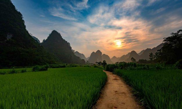 Vietnam's Biodiversity Crisis