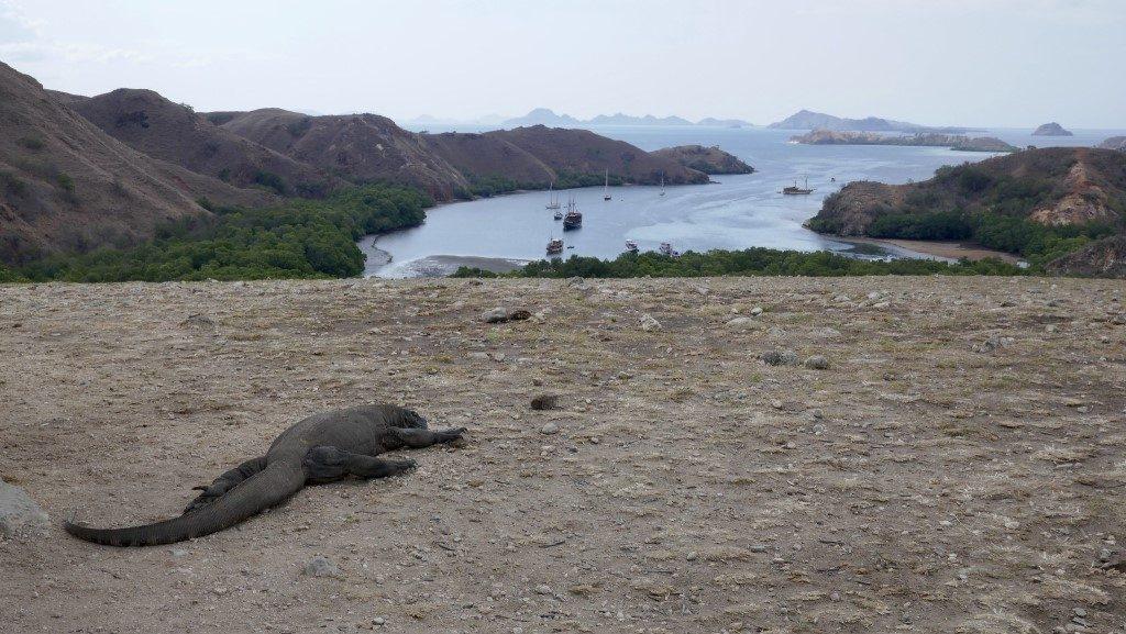 Rinca Island - Indonesia