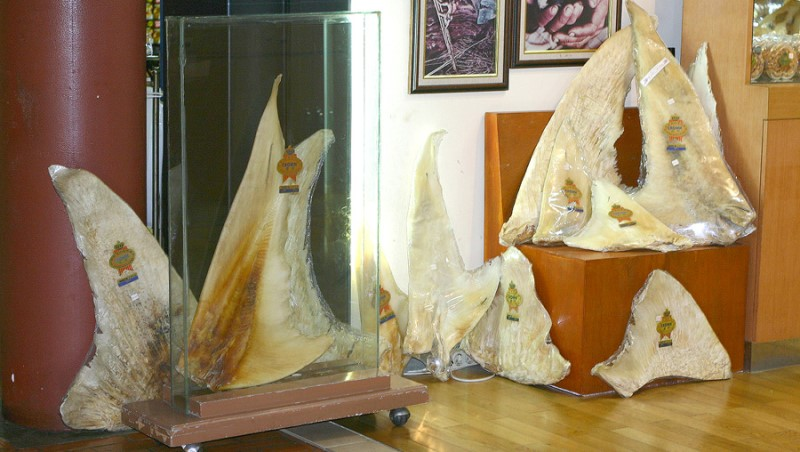 Shark Fins Store Indonesia   Rani Soemardjan